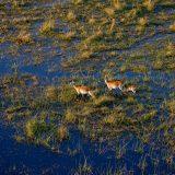 fabian_von_poser_Wildlife_004